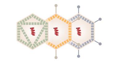 desktop-vacunacovid-vacunavectoresvirales